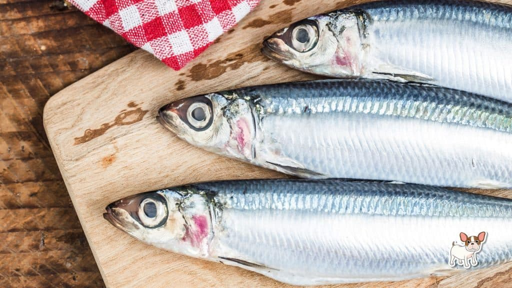 Fresh sardines are good for dogs