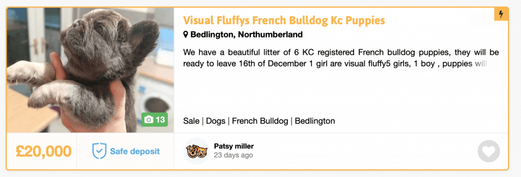 fluffy frenchies for sale
